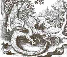 winged dragon ouroboros