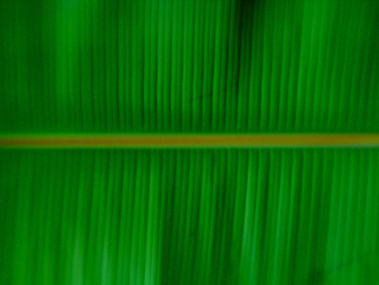 banana leaf fruit wallpaper