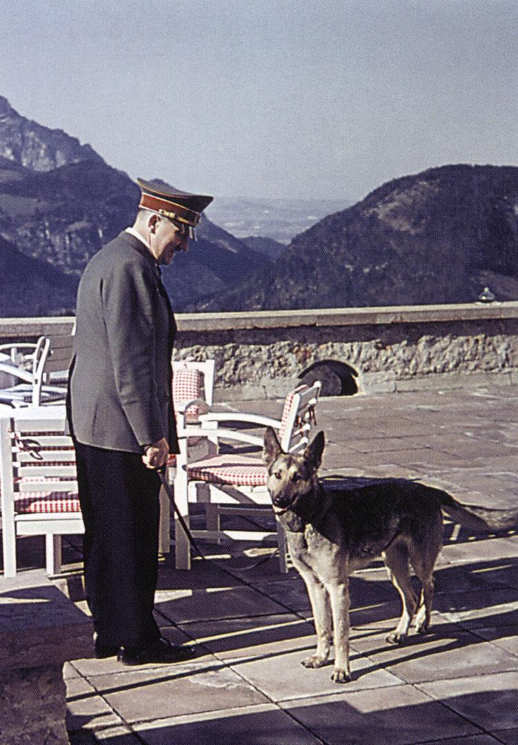 Dog Ignoring Hitler