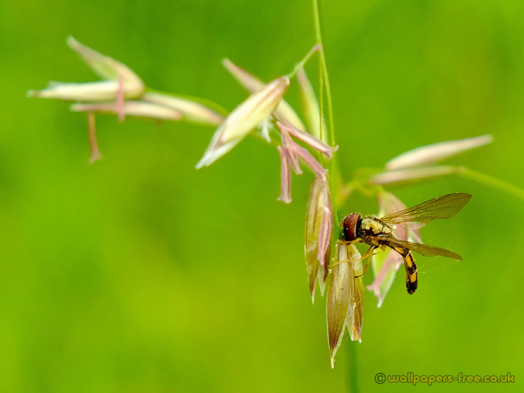 Hover Fly Suspended