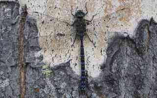 dragonfly on tree