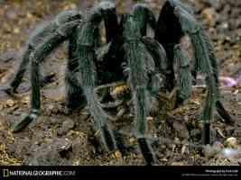 Tarantula Portal Arizona 1971