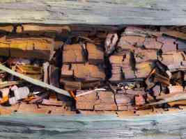 shattered dry wood in log