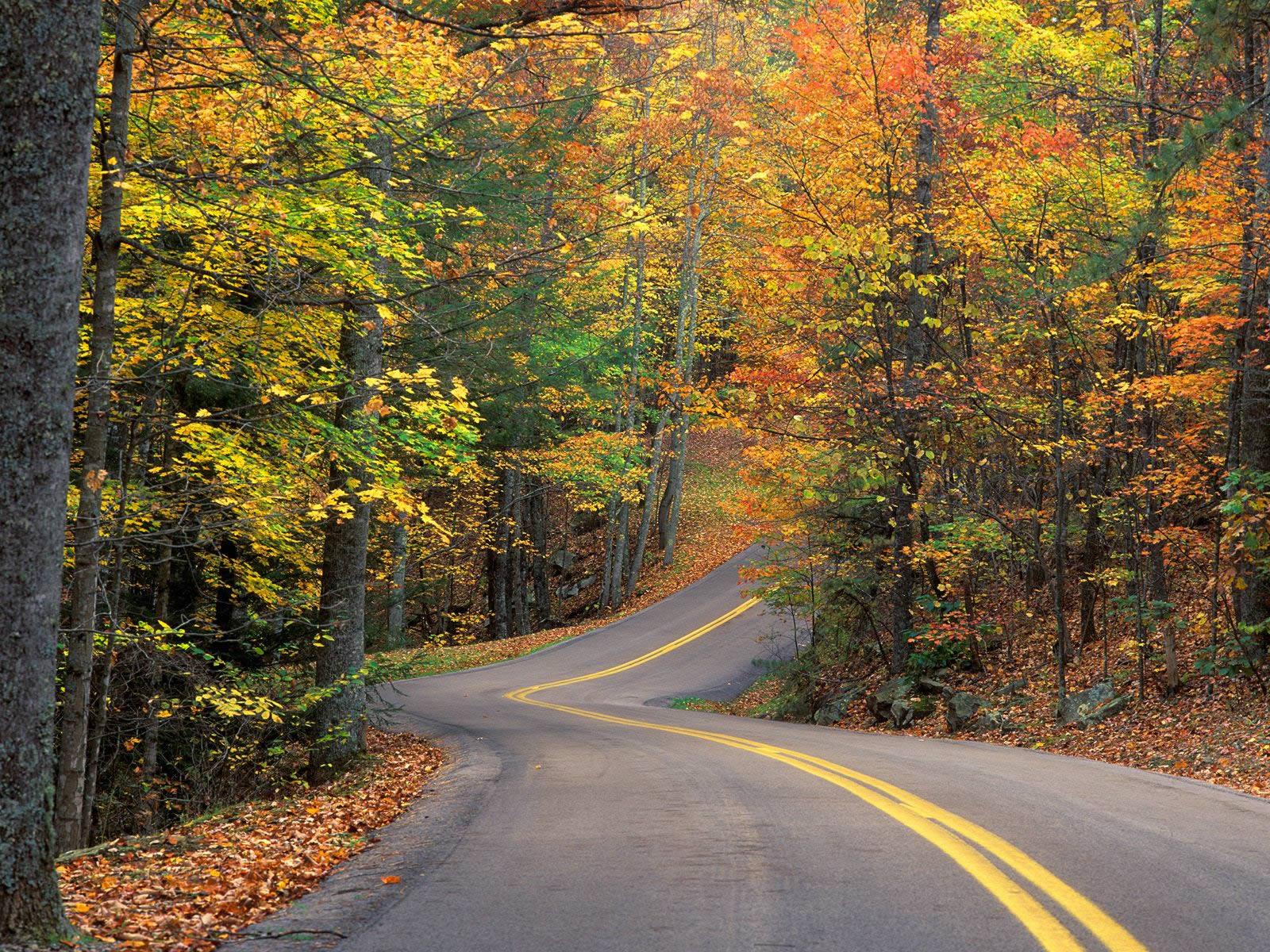 Autumn Colors Road