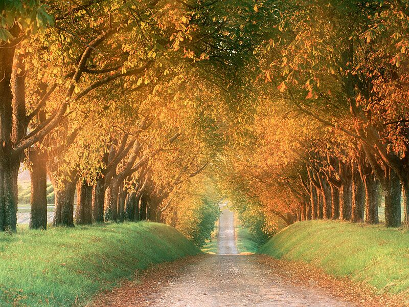 Autumn Road Cognac Region France