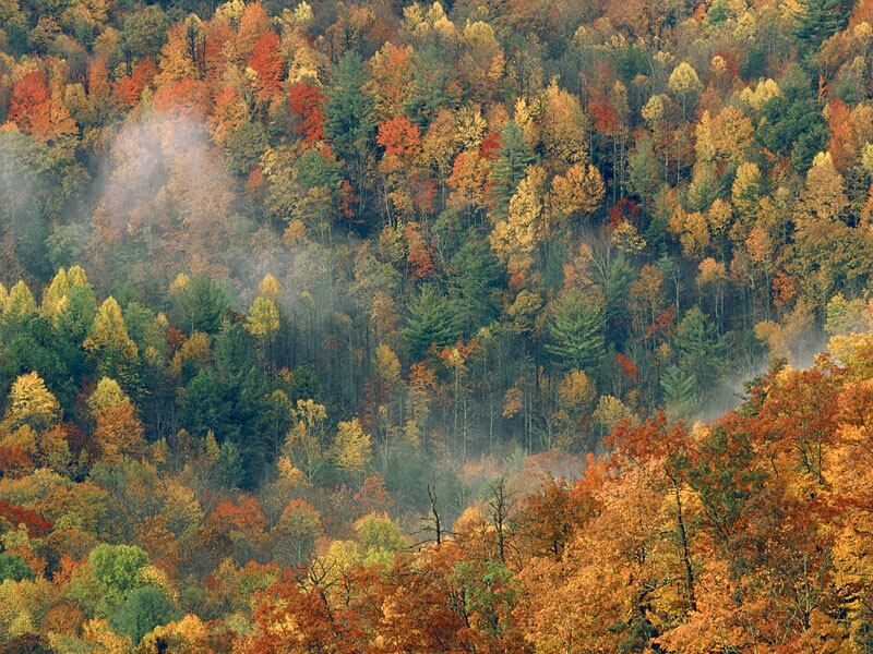 Colorful Autumn Forest Great Smoky National Park Tennessee