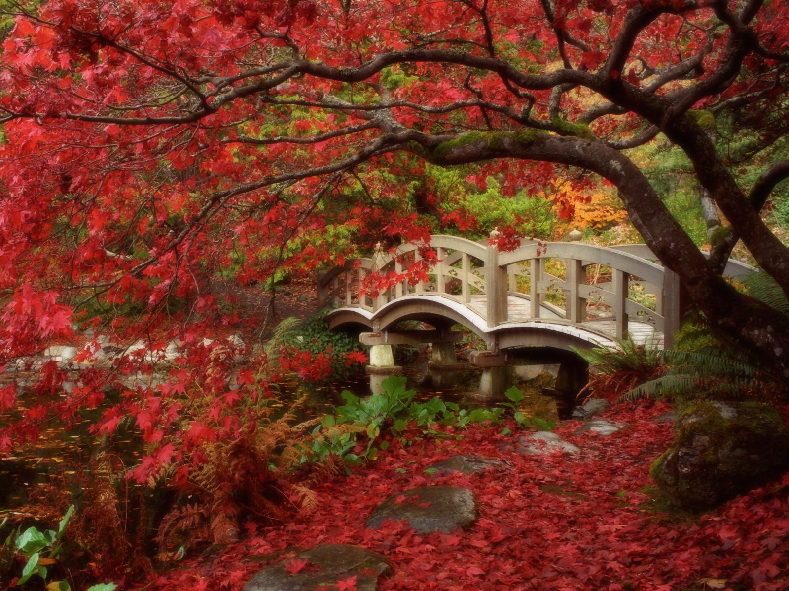 Japanese Garden Royal Roads University British Columbia
