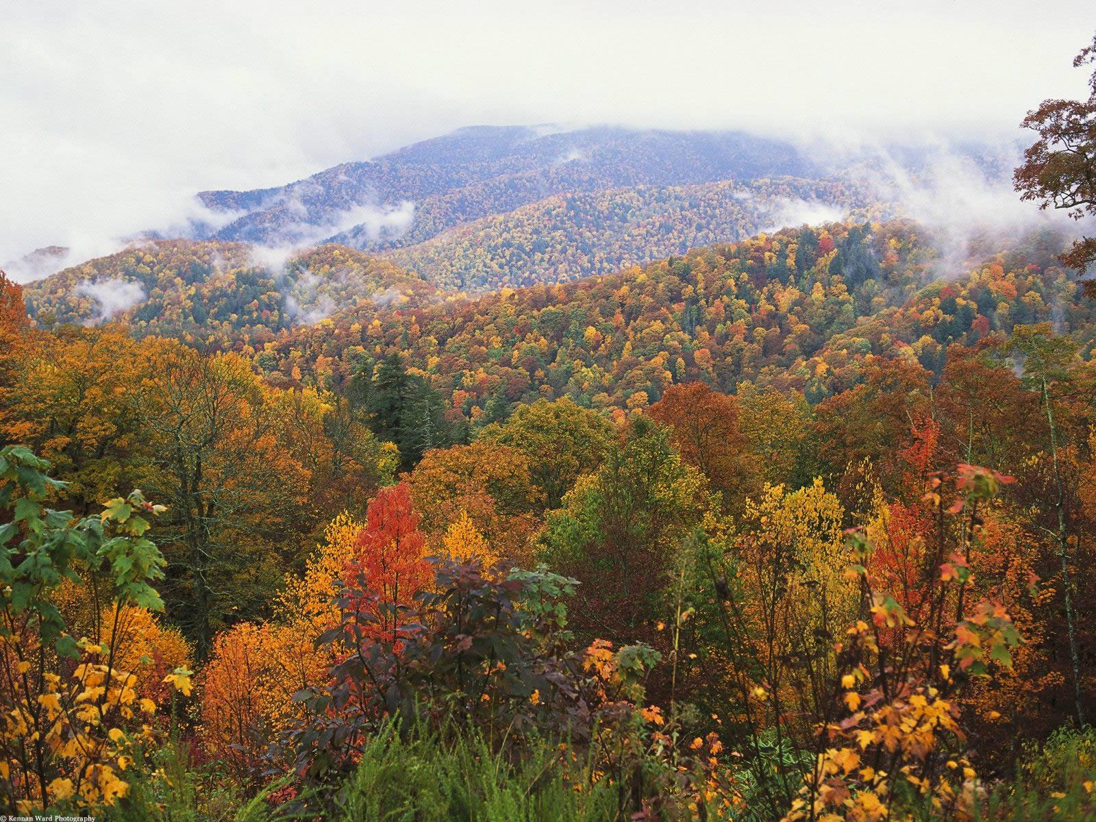 Lush Landscape Appalachian Mountains North Carolina