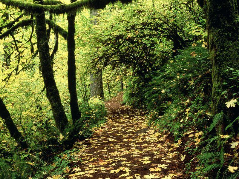 Maple Lined Silver Creek Trail Silver Falls Oregon