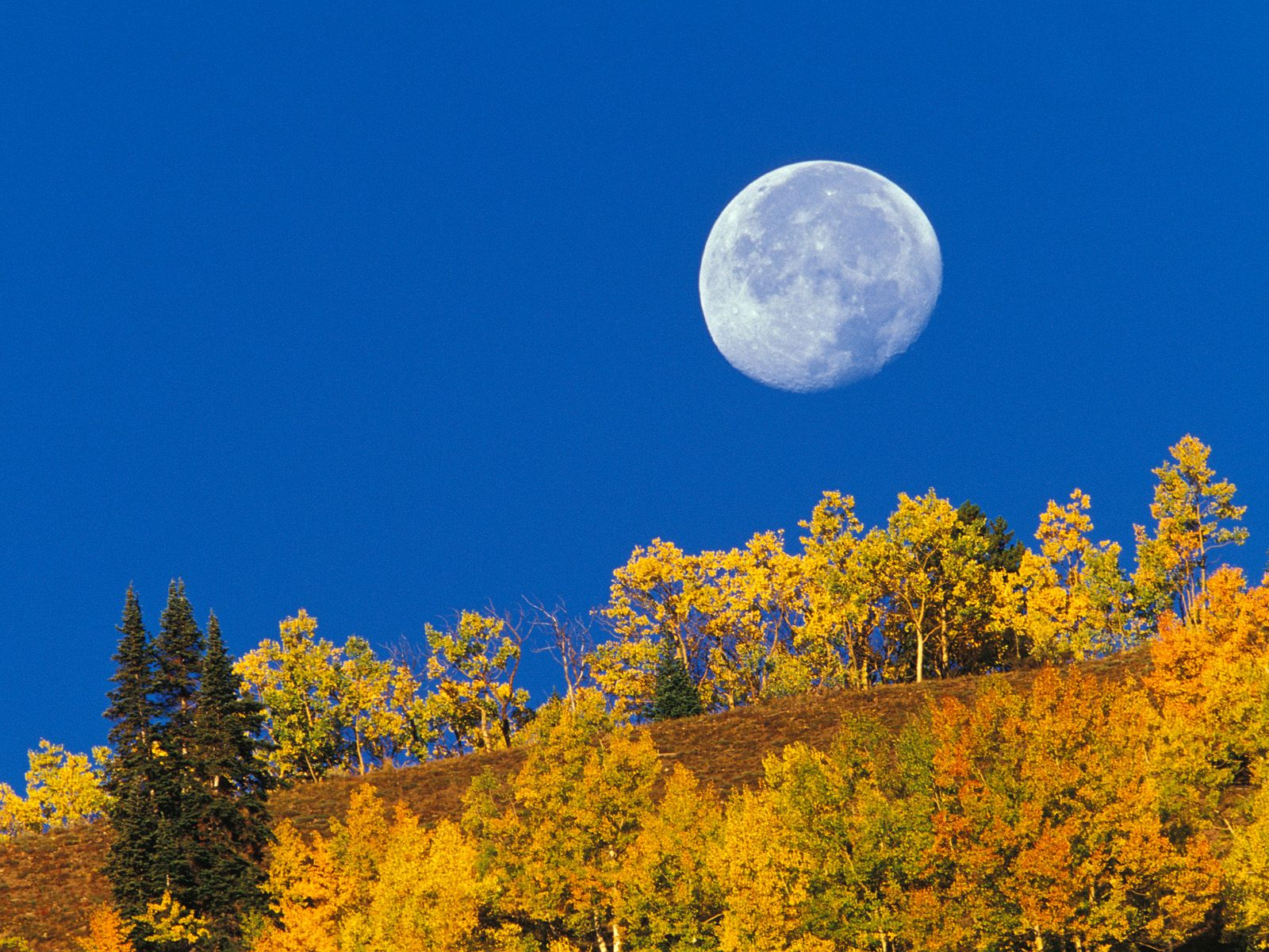 Moon Setting At First Light Crested Butte Colorado