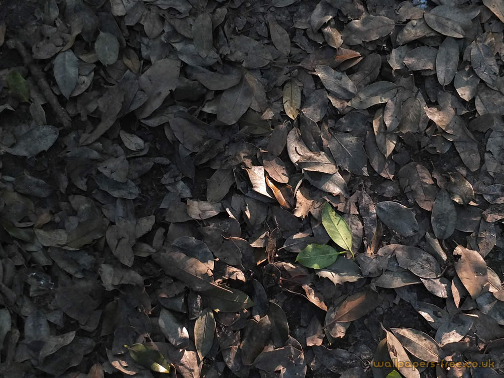 Autumn Leaves In Dappled Light