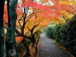 Autumn Colors Kyoto Japan