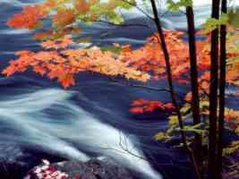 Oxtongue River Ontario Canada