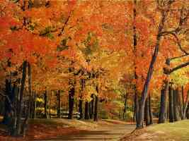 indiana park county trees