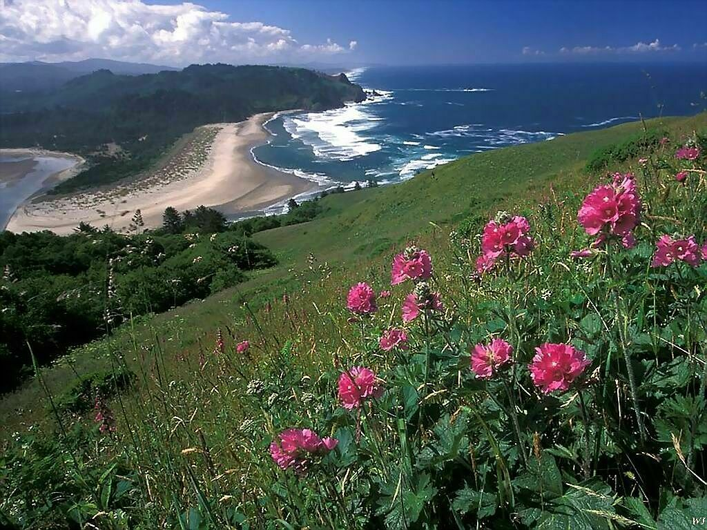 Cascade Head Oregon