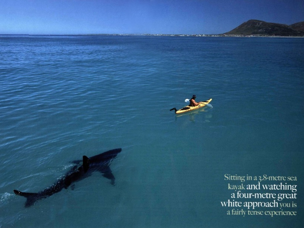 Kayaking In South Africa