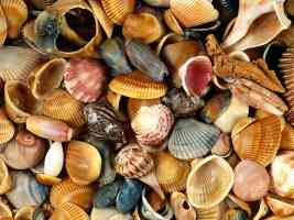 Seashells Atlantic Coast Florida