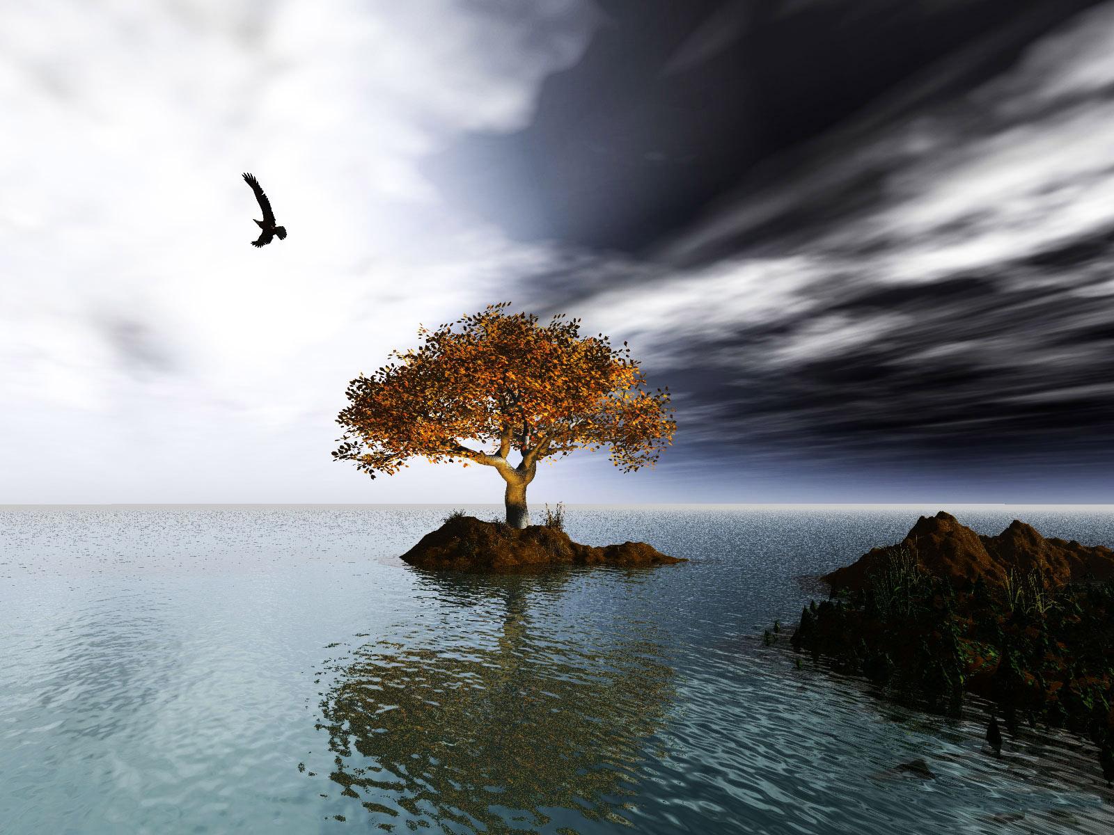 Tree On An Island