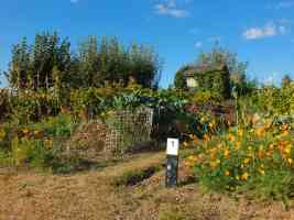 allotment patch one
