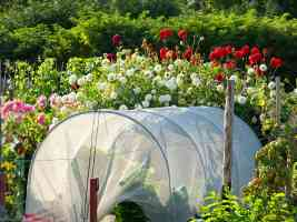 allotment poly tunnel