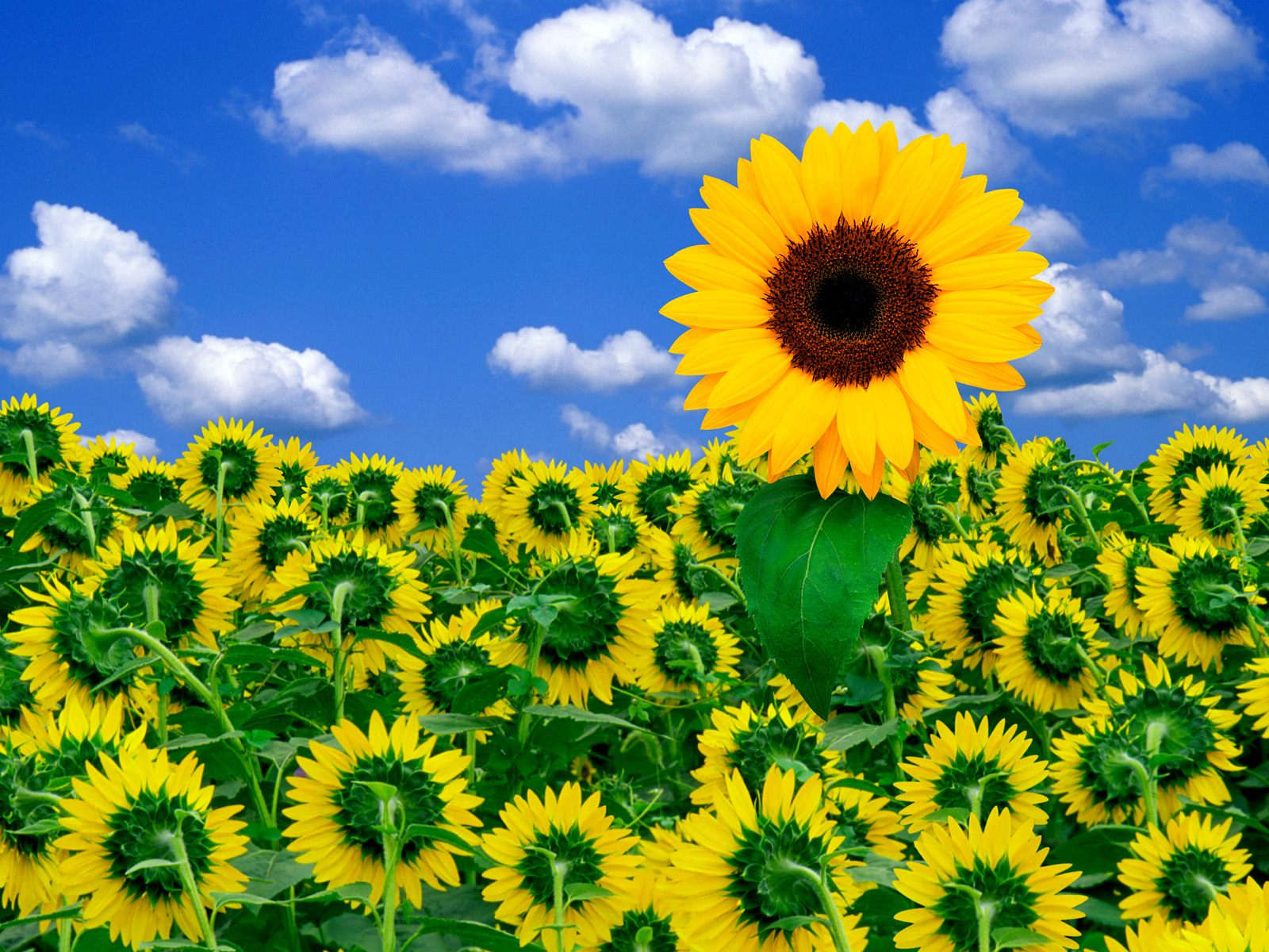 A Little Sunshine To Brighten Your Day