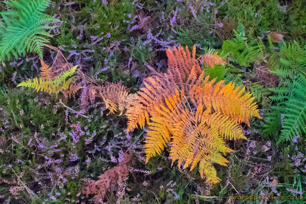 Colorful Ferns