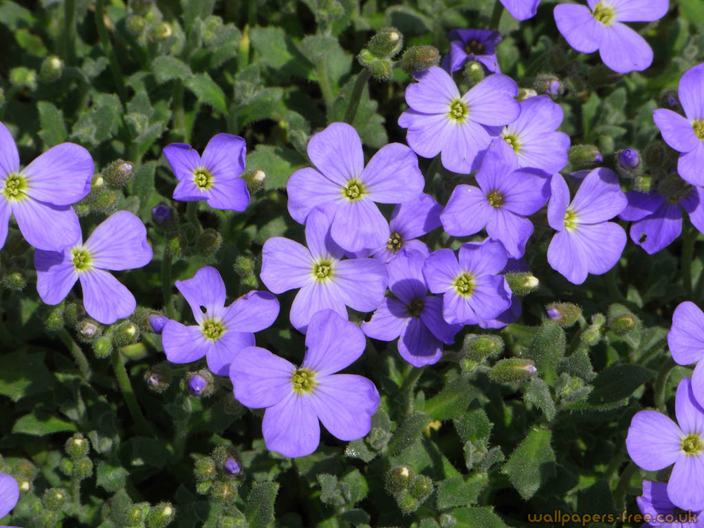 Purple Flowers Flowers And Plants Wallpaper