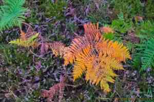 colorful ferns