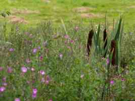 flowers and bullrushes 2