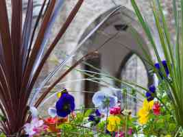 pansies and arch
