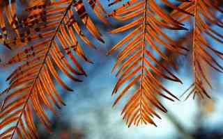 windcatchers brown fern