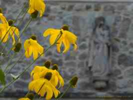 yellow coneflowers with statue in distance