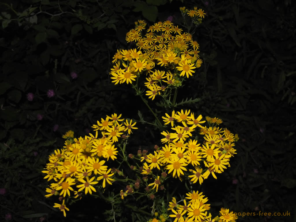 Download Wallpaper Night Flower - yellow-flowers-at-night  Collection-641014.jpg