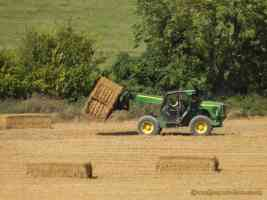 bringing in the hay