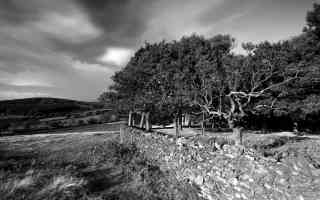 woodland landscape black and white