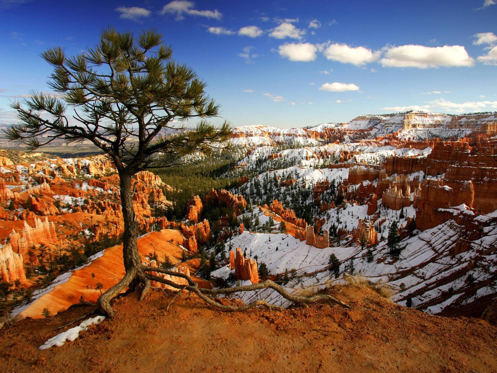 Alone On The Rim Bryce Canyon National Park Utah