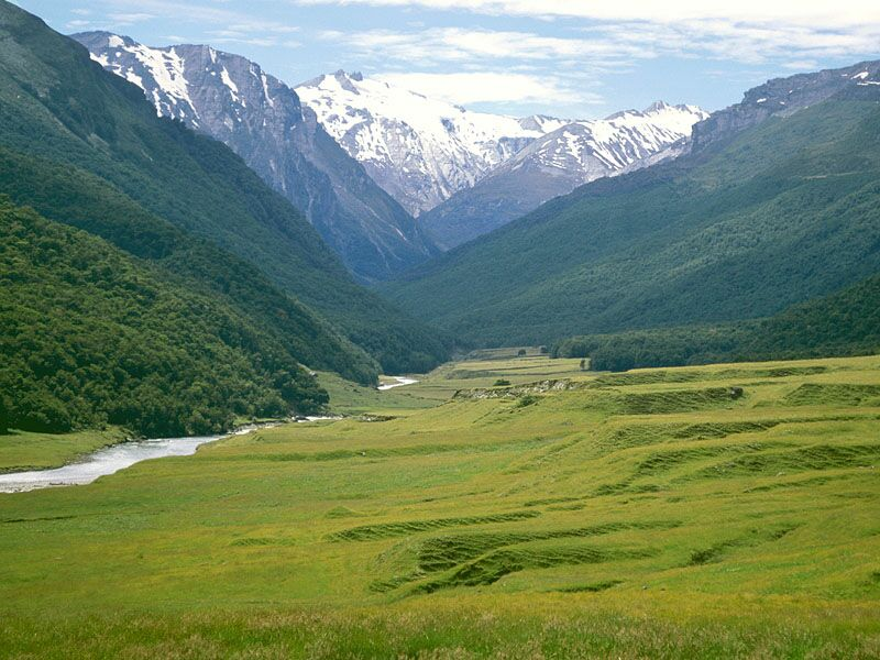 Cattle Flats Dart River New Zealand