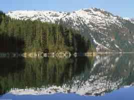 Coastal Sitka Spruce Forest Southeast Alaska