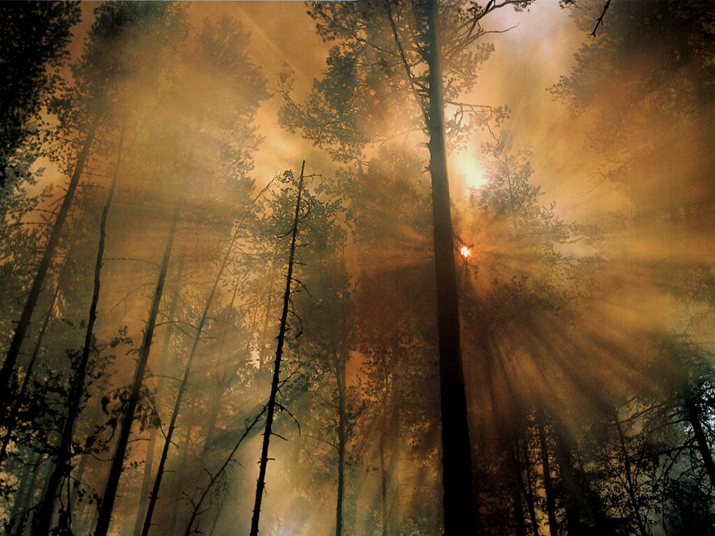 Forest fire the morning after natural phenomenon wallpaper forest fire the morning after next natural phenomenon wallpaper voltagebd Gallery