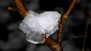 ice crystal on branch