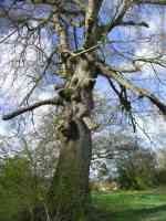 mutant deformed tree