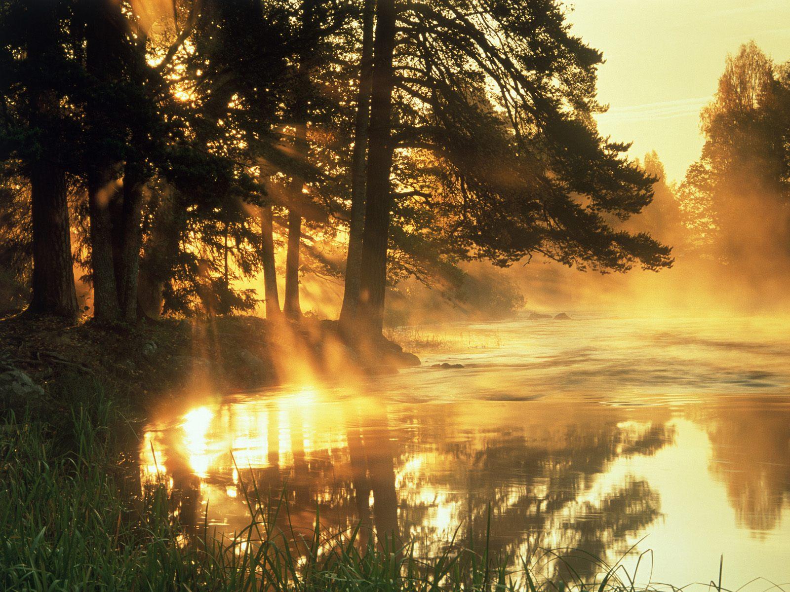 Dal River Sweden Dappled Light And Woodland