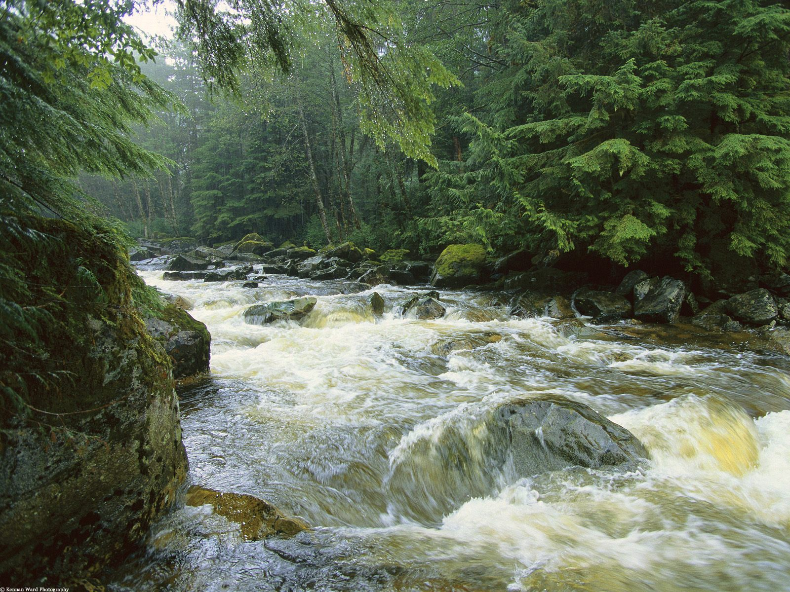 Rivers And Streams Rushing Salmon Stream Princess Royal Island Canada