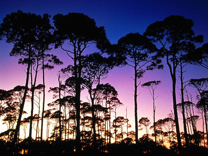 Coastal Pines St Joseph Peninsula State Park