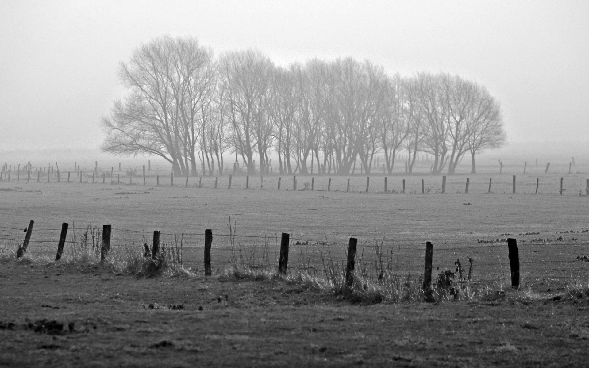 Black And White Winter Copse Of Trees
