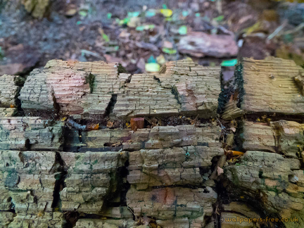 Fractured Wood