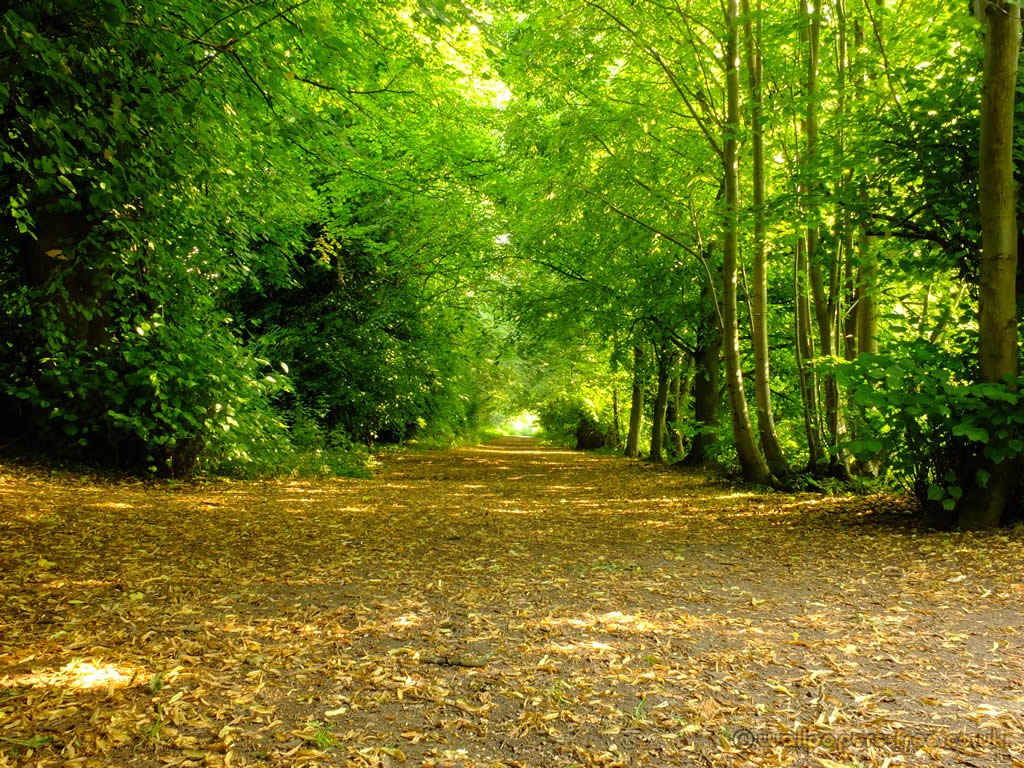 leafy road trees woodland and forests wallpaper