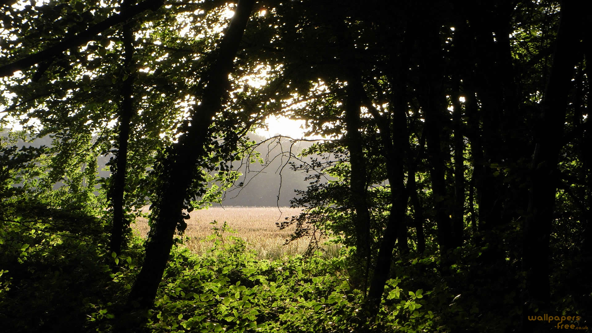 Looking Through The Woodland To The Sunlight