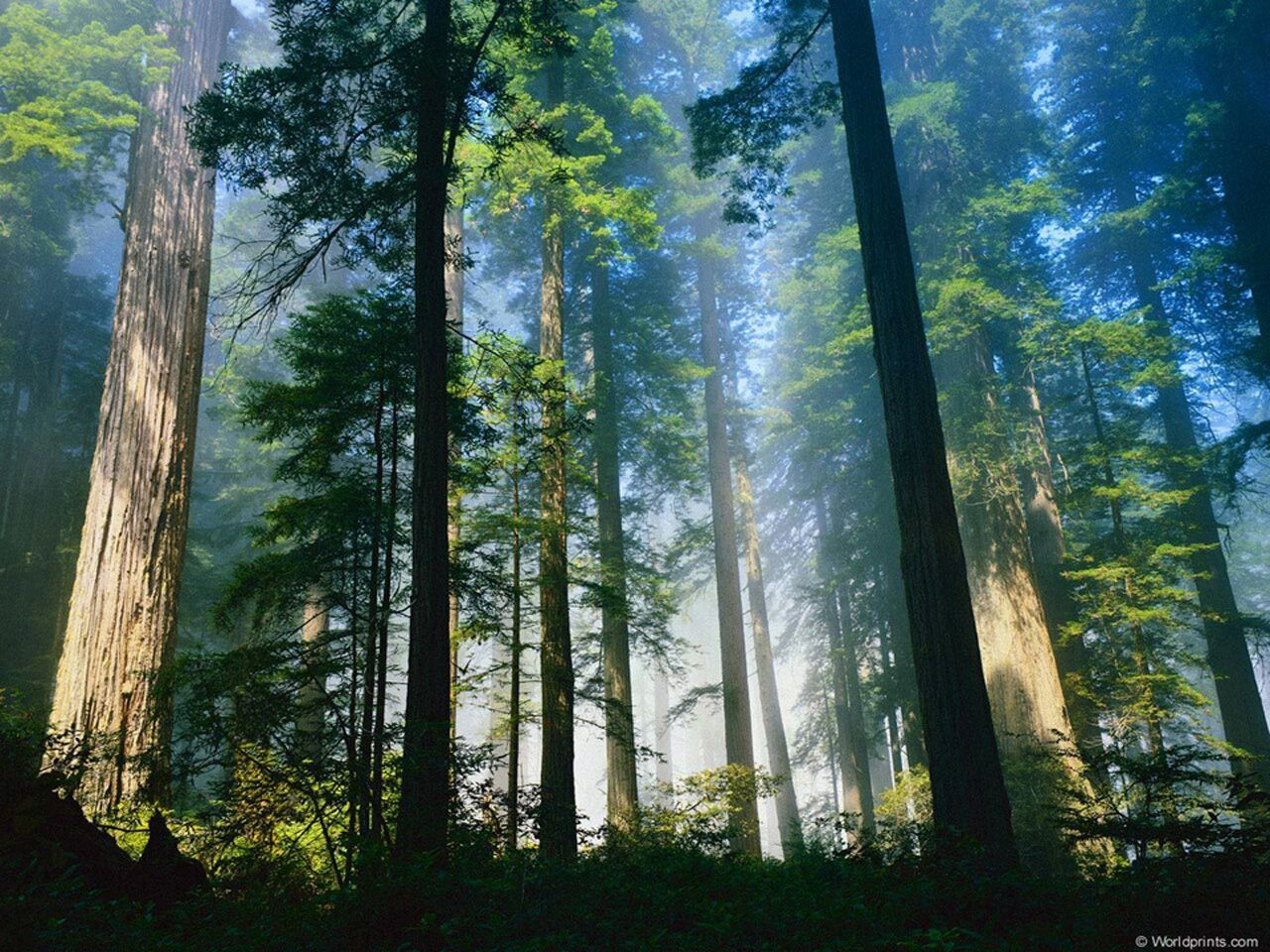 Misty Sunlit Trees