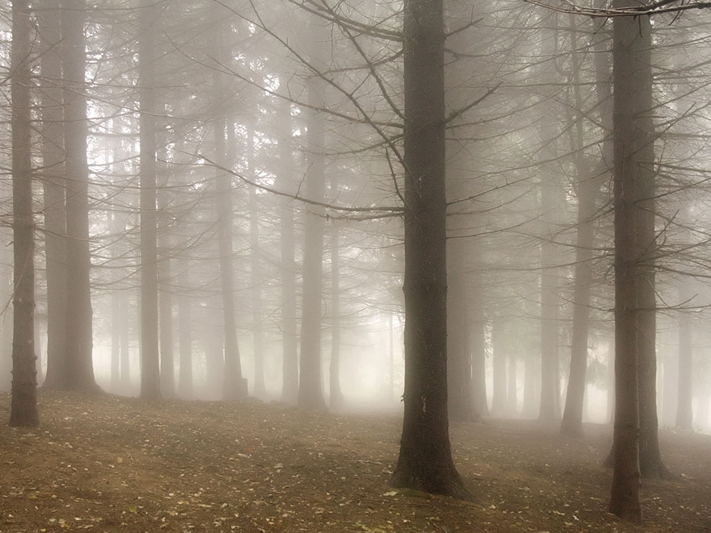 misty woodland trees woodland and forests wallpaper